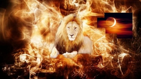 lion_flaming-lion_crop_50