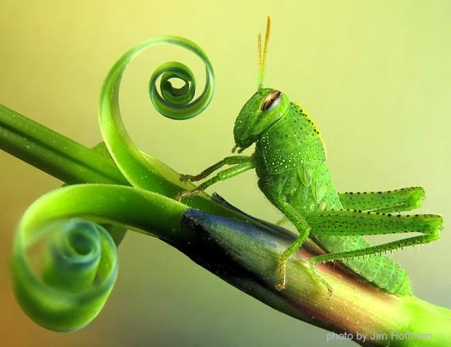 grasshopper_spiral_jimHoffman_crop
