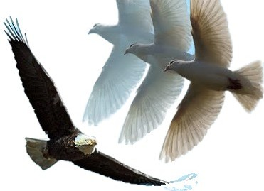 dove+eagle_CUT