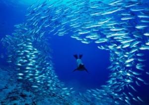 ocean-seal-portal_CROPx385