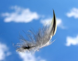 feather-floating_x385