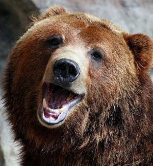 150320_bearSmiling