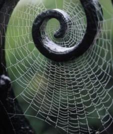 150418_spider_web_001_x226