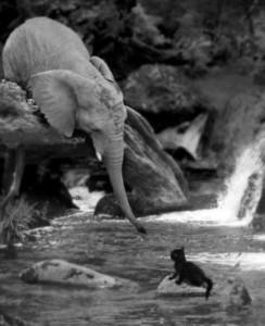 150814_elephant_Kitten_pinterstCROPx300